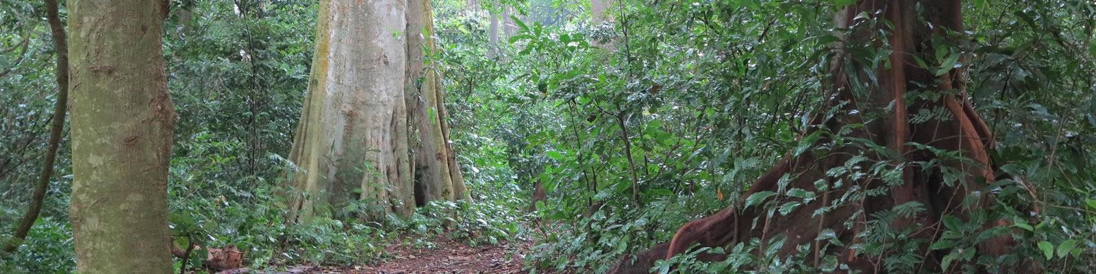 Full Day Hike at Rau Forest Reserve near Moshi