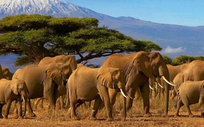 Serengeti Ngorongro